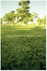 sibafu_gaien